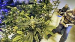 Legalización de marihuana en Estados Unidos no ha resuelto problemas de