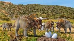 Les gros dinosaures avaient une technique bien particulière pour couver leurs