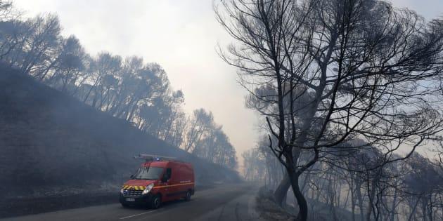 Après les incendies, comment la forêt repousse-t-elle?