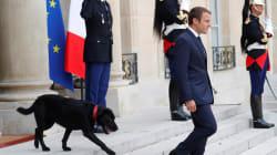 En adoptant Nemo, Macron se plie à une longue tradition