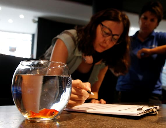 France's unwanted goldfish get new home in sanctuary