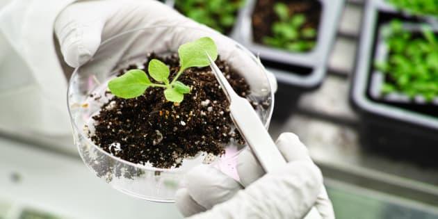 Che ne pensa il Governo del CRISPR vegetale e delle biotecno