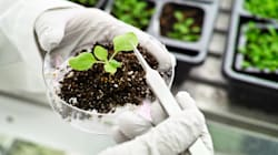 Che ne pensa il Governo del CRISPR vegetale e delle