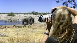 Un éléphant piétine un chasseur en