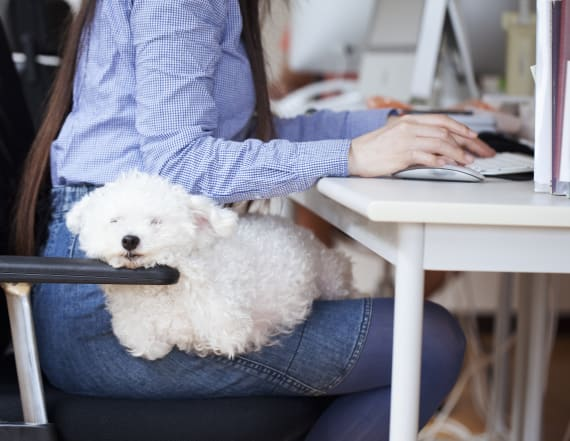 20 companies that let you bring your dog to work