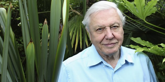 David Attenborough listens like he has all the time in the world.