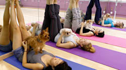 Here Are The Nine Strangest Yoga Fads From Around The