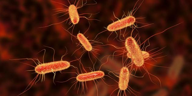 Qu'est-ce qu'Escherichia coli, la bactérie à l'origine du retrait des reblochons de la fromagerie Chabert ?