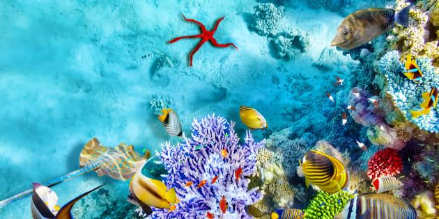 Arrecife de corales con especies marinas.