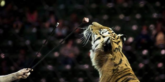 Paris s'engage a devenir une ville sans animaux sauvages dans les cirques