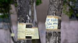 Árboles mexicanos envejecen; su capacidad para mitigar el cambio climático se