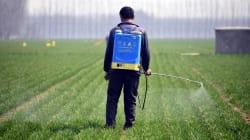 Brasil será 'paraíso dos agrotóxicos', diz