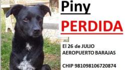 Una joven pide ayuda en redes para localizar a su perra perdida en Barajas por