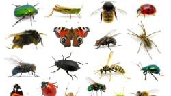 Près de la moitié des espèces d'insectes en déclin dans le monde
