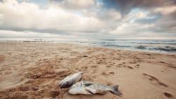 Las zonas muertas se cuadruplican en los océanos de la
