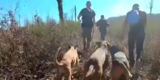 Des anti-chasse à courre tentant de protéger un cerf dans le Tarn le 16 février 2019.