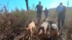 Des chasseurs menacent de mort des anti-chasse à courre, Rémi Gaillard en appelle à