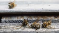 Le Canada veut interdire deux pesticides nocifs pour les insectes aquatiques et les