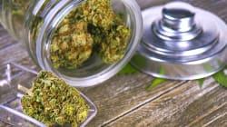 Ce que la légalisation thérapeutique du cannabis peut
