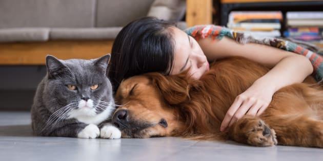 La Fondation 30 Millions d'Amis propose sur leur site un annuaire pour trouver la bonne garde pour votre animal ainsi qu'un kit gratuit pour organiser les vacances de votre compagnon à quatre pattes.