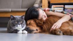 Comment faire garder vos animaux pendant les