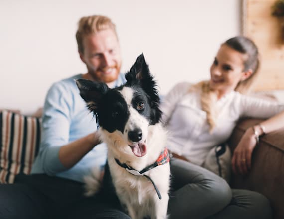 6 tax breaks for pet owners you can actually get