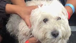 Salvata una cagnolina dalla nave Aquarius: era insieme a 58