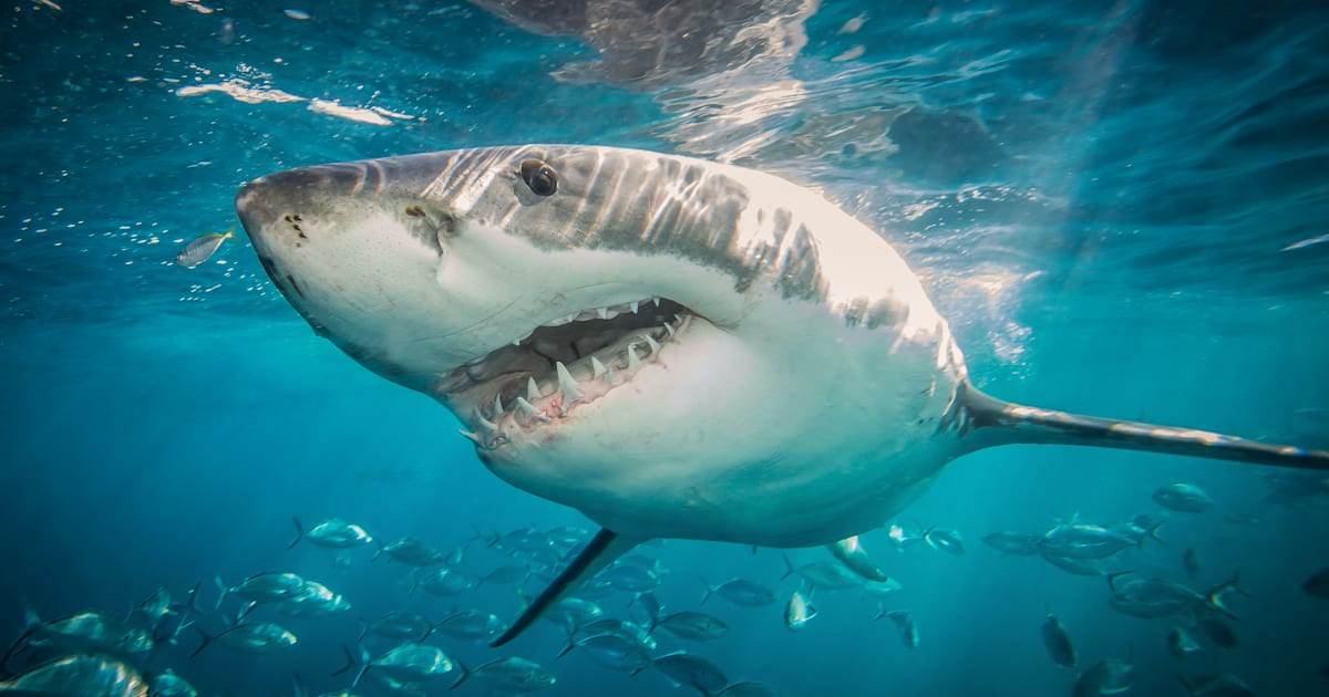 Shark Attack On South Australian Teenager 'Like Everything You Picture In The Jaws Movie'