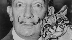 La moustache de Dali toujours intacte 28 ans après sa
