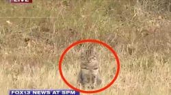 Un adorable chat interrompt une émission en direct parlant d'un