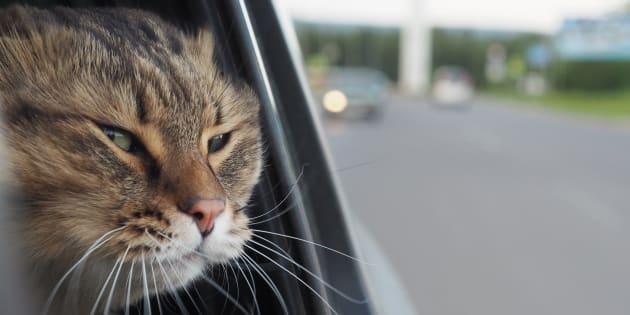 In provincia di Arezzo un gatto chiude i padroni fuori dall