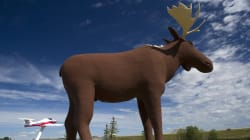 ▶ Make Moose Jaw's Moose Statue The Biggest In The World