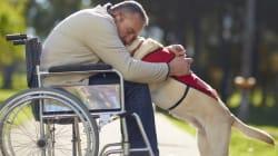 Este vídeo te hará entender por qué el perro es el mejor amigo del