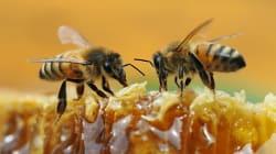 Nuevo estudio revela la capacidad de las abejas para sumar y