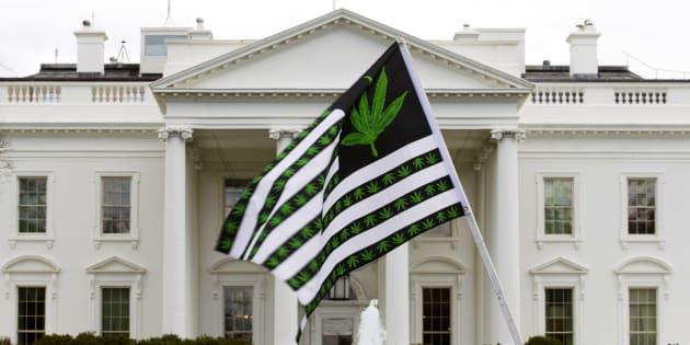 El candidato de la marihuana: la pelea de los demócratas rumbo a la Casa Blanca en 2020