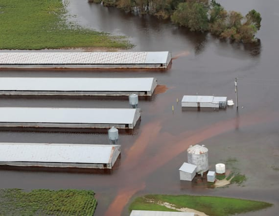 1.7 million chickens drown during Hurricane Florence