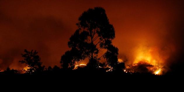 """Feu de forêt au Portugal: la piste criminelle écartée, les autorités privilégient """"un orage sec"""""""