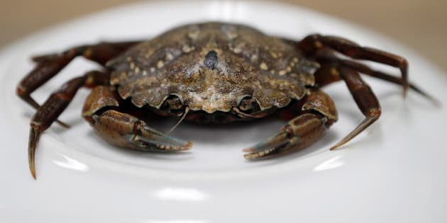 This June 6, 2018, file photo shows a green crab in Portland, Maine.