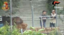 Blitz anti-Ndrangheta contro la cosca