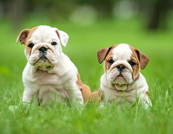 Puppy pics could help rekindle your marriage