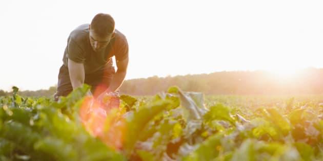 Ne laissons pas la grande distribution dicter sa loi à l'agriculture biologique.