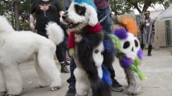 ¡Los humanos qué! Las mascotas en Halloween son lo