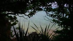 ペット利用される南西諸島固有の両生・爬虫類 最新報告書発表