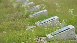 Encuentran en Estonia cementerio militar alemán de la Segunda Guerra