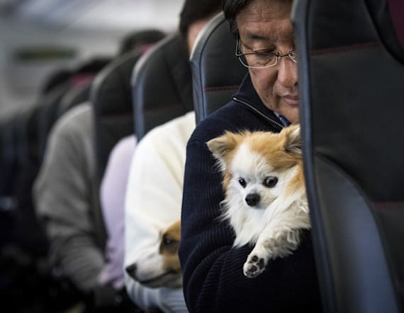 Delta to tighten emotional support animal policies