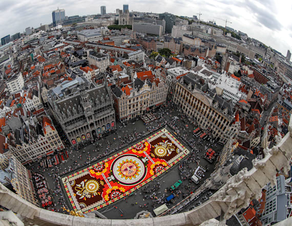 Huge flower carpet blooms in Brussels' city center