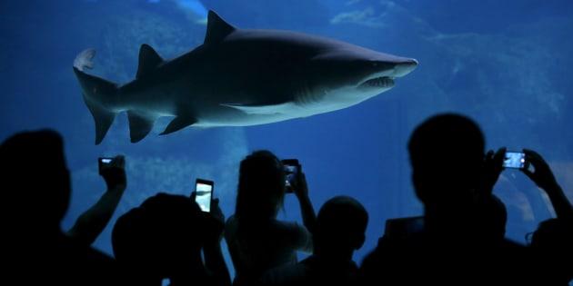 Please don't Tweet the sharks.