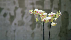 How To Look After An Orchid And Not Let It Die