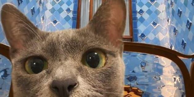 Amener son chat en voyage? MaoMay et ses maîtres sont devenus des experts