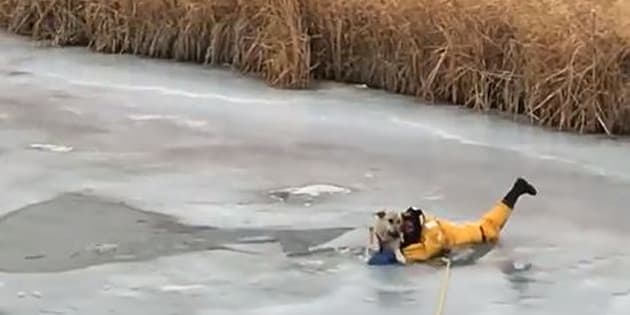Ce chien était en bien mauvaise posture avant d'être sauvé par les pompiers
